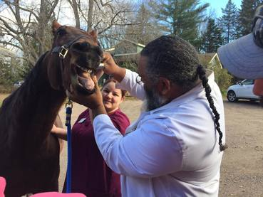 Horse patient at Chippewa Animal Clinic and Sault area Animal Hospital